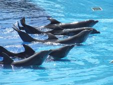 Free Dolphins Playing Stock Photos - 3633743