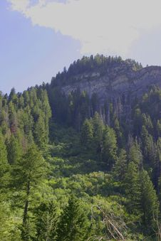 Free Mountain With Trees Royalty Free Stock Photo - 3633865