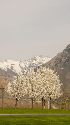 Free Trees And Mountain Range Royalty Free Stock Images - 3633879