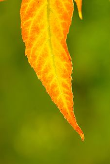 Free Foliage Stock Photo - 3634460