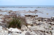 Grass On Rocky Lakeshore Royalty Free Stock Images