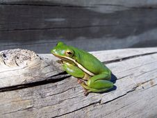Free Frog Pose Stock Images - 3635414