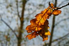 Free Foil At Autumn Stock Photography - 3635922