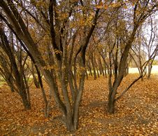 Free Park Royalty Free Stock Photo - 3636095