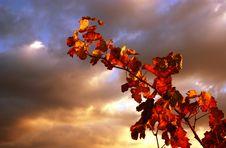 Free Sunset Vine Stock Photos - 3636393