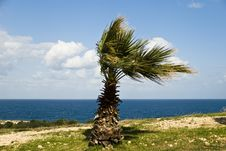 Free Palm In The Wind - On The Sea Stock Photos - 3636803