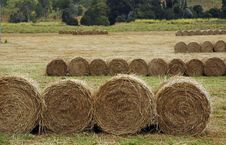 Free Hay Stock Photography - 3637632