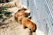 Free Aviary With Bears. Berne, Switzerland. Royalty Free Stock Photos - 36307298