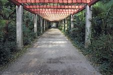 Free Pergola Passage Royalty Free Stock Images - 36309739