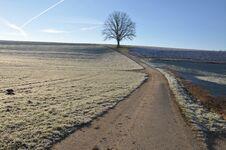 Free Lone Oak In Winter Stock Photo - 36310820
