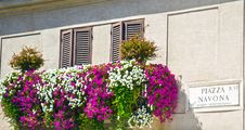 Free Navona  Square, Rome Royalty Free Stock Photos - 36316018