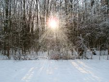 Free Sunshine In A Winter Forest Stock Photo - 36317570