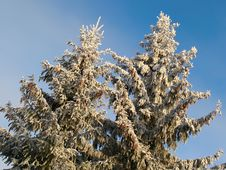 Free Winter Landscape With Snowy Fir Trees Stock Photos - 36317723