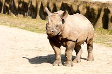 Free Rhinoceros In The Zoo Stock Photo - 36319040