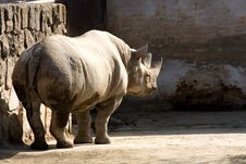 Free Rhinoceros In The Zoo Stock Images - 36319184