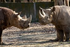 Free Rhinoceros In The Zoo Royalty Free Stock Photo - 36319215