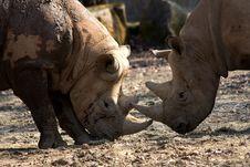 Free Two Rhinos Stock Photos - 36319223