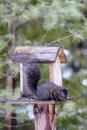 Free Black Squirrel At Backyard Feeder Royalty Free Stock Photos - 36323018