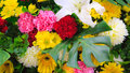 Free Bunch Of Flowers Stock Image - 36327451