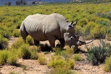 Free Rhinoceros In Safari Park Stock Photography - 36321972