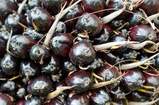 Free Palm Oil Fruit Royalty Free Stock Image - 36323246