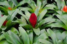 Bromeliad Flowers Stock Images