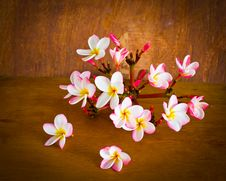 Free Plumeria Flower On Table Stock Photography - 36329182