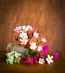 Fresh And Colorful Flower Royalty Free Stock Photography