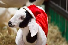 Free White Goat Stock Photos - 36329553