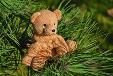 Free Are You Sure Bears Can Climb Trees Stock Images - 36330354