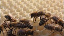 Bees Build Honeycombs Stock Photos