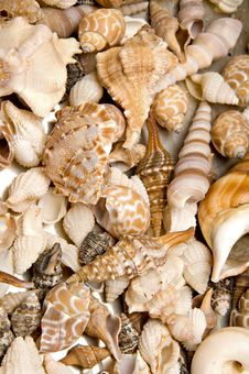 Free Sea Shells Royalty Free Stock Photos - 36338528