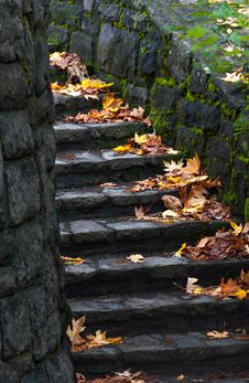 Free Old Staircase In The Forest Stock Photo - 36338530