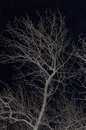 Free The Bare Branches Stock Photography - 36346042
