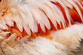 Free Feathers Of A Bird Stock Photography - 36363072