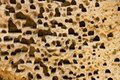 Free Holes In Sandstone Stock Photography - 36366122