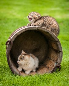 Free Cat Royalty Free Stock Images - 36361609