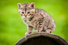 Free Cat Stock Image - 36361621