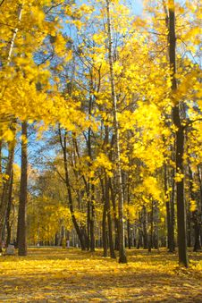 Free Leaf Fall In Autumn Park Royalty Free Stock Photography - 36364327