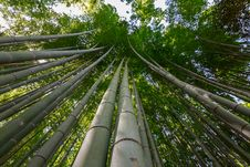 Free Bamboo Forest Stock Images - 36367344