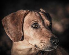 Free Dog Royalty Free Stock Images - 36369859