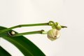 Free Flower&x27;s Buds. Stock Image - 36379281