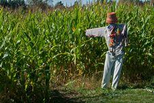 Free Funny Looking Scarecrow Stock Photos - 36373053