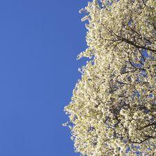 Free Springtime Sky Royalty Free Stock Photo - 36375435