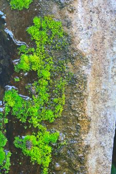 Free Old Wall With Moss And Various Stains Royalty Free Stock Image - 36378966