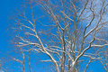 Free Clear Winter Day Royalty Free Stock Photography - 36386747