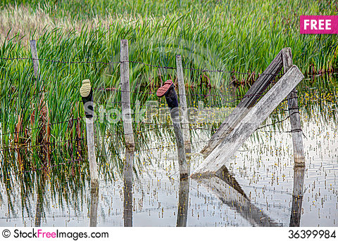 Free Rubber Boots Stock Images - 36399984