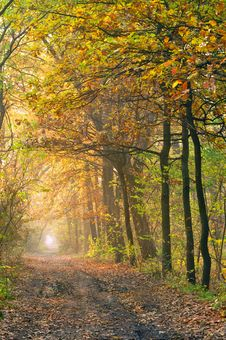 Morning In The Wood Royalty Free Stock Photography