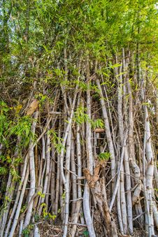 Bamboo Poles. Stock Images