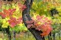Free Autumn Royalty Free Stock Image - 3642496
